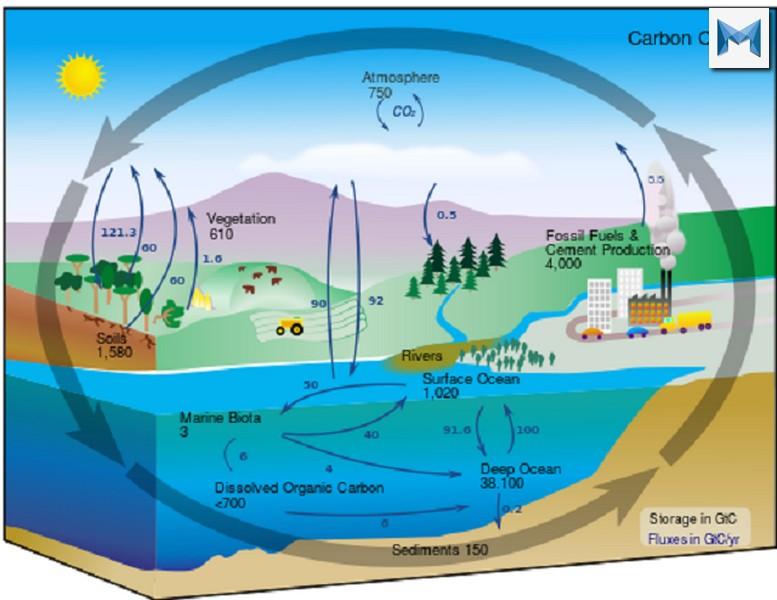 Nhân tố sinh thái là gì? Các loại yếu tố sinh thái trong môi trường