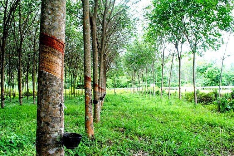Đất trồng cây lâu năm là gì? Có được phép xây nhà không?