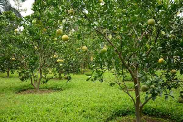 Đất trồng cây lâu năm